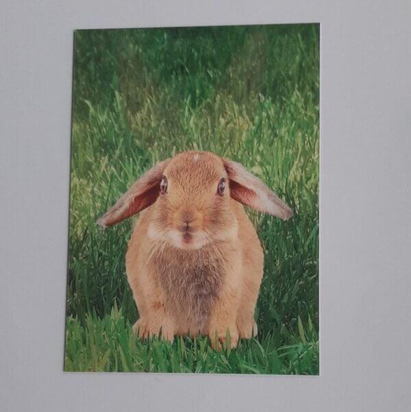 3d konijn