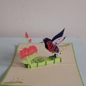 pop-up kolibrie