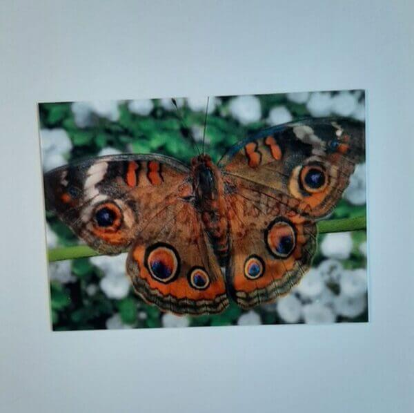 3d rups-vlinder