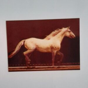 3d paard in draf